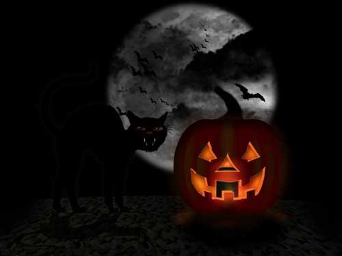 Cat & Pumpkin Halloween Wallpaper