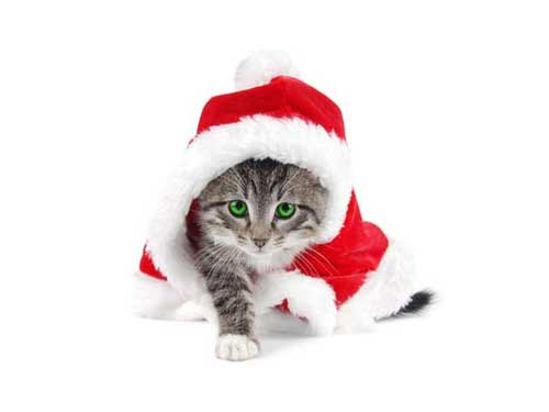 Best Christmas Images, Icons & Wallpapers - Christmas Cat Wallpaper