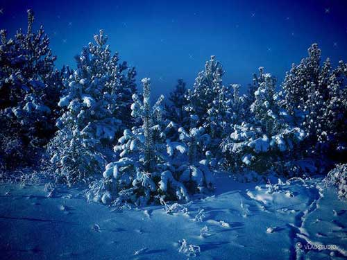 Best Christmas Images, Icons & Wallpapers - Siberian Winter Wallpaper by Vladstudio