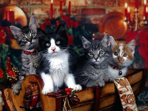 Best Christmas Images, Icons & Wallpapers - Xmas Kittens Wallpaper
