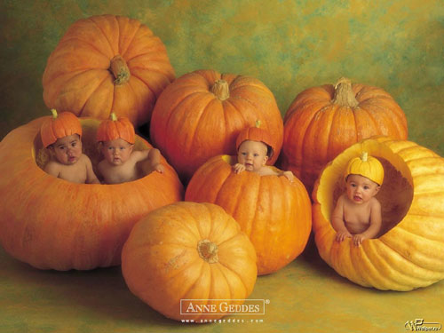 Halloween Wallpapers - Pumpkin Patch Babies